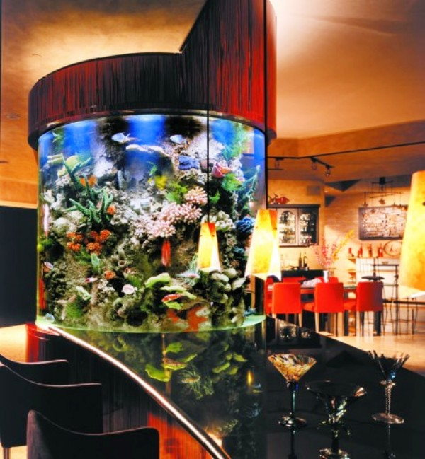 Elegant Creative magnificent Aquarium design