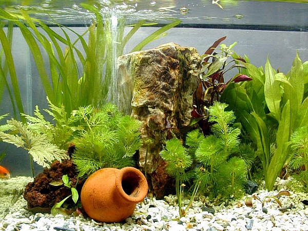Fresh Plants Aquarium